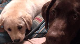 Bella and Bonnie - Service dog