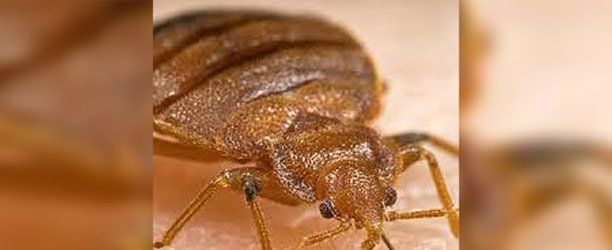 Bed Bug Extermination Bed Bug Removal Oklahoma City Ok