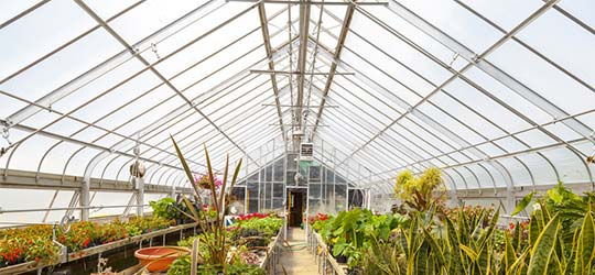 Greenhouse from inside