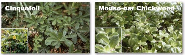 Weed Control Service | Weed Treatments | Ortonville, MI
