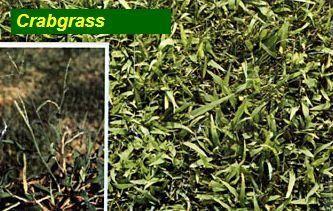 Grass Types Grass Maintenance Ortonville Mi