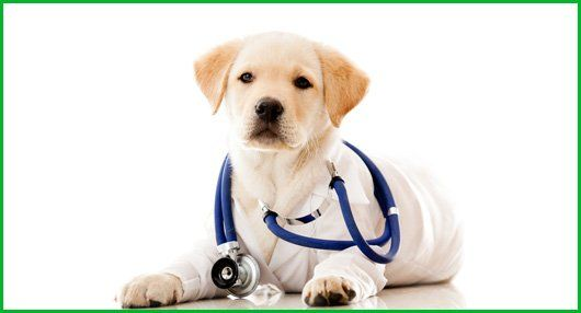 About Animal Care Clinic Lubbock Tx Veterinarians