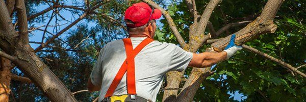 Tree Services Tree Removal Spring Hill Fl