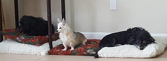 Doggies day care