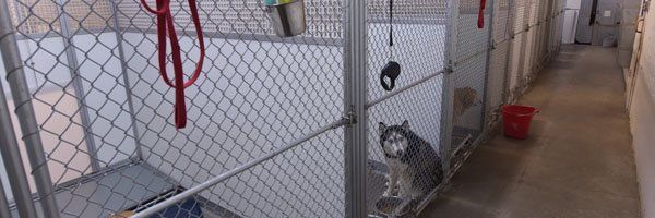 Dog kennel area