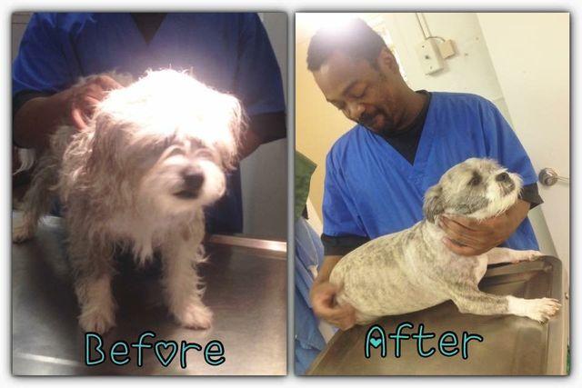 Pet Grooming | Fur Trimming | South Charleston, WV