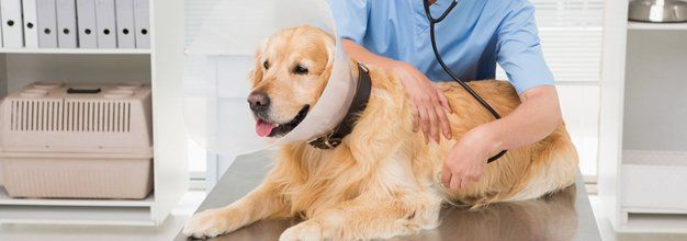 Pet Surgical Care | Spaying | South Charleston, WV