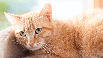 Avalon Dog and Cat Hospital | Pet Care | South Charleston WV