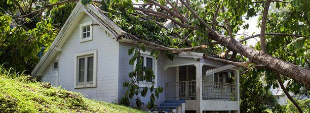 Tree collapsed on house
