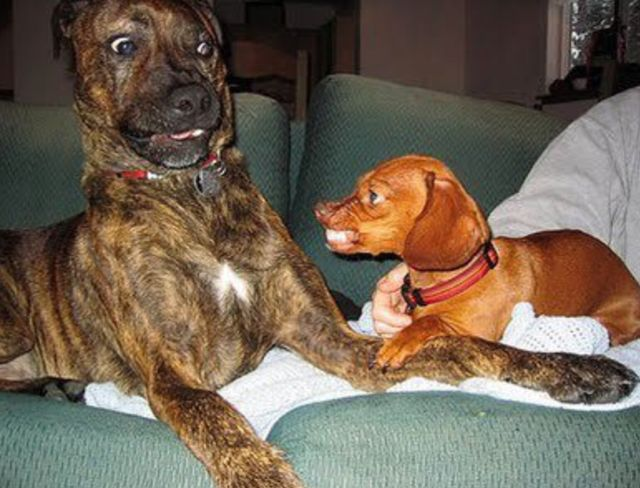 Behave dogs