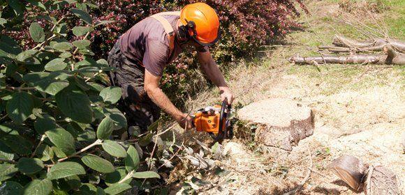 shrub removal
